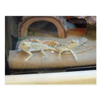 Pet Store Lizards Postcard