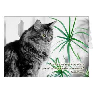 Pet Sympathy Card for Cat
