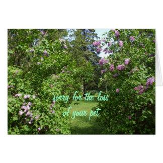 Pet Sympathy-lilac Bush Greeting Cards