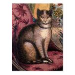 Pet Tabby Cat with Collar Blue Ribbon Postcard