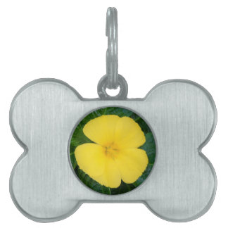 Pet Tag - West Indian Holly