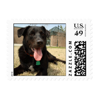 Pet therapy dog postage stamp