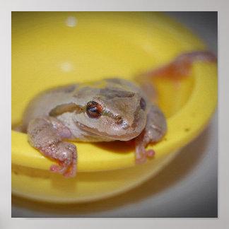 Pet Tree Frog Print
