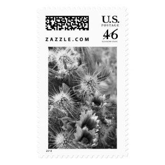 Petal Opposites Postage Stamp (AZ Desert Photos)