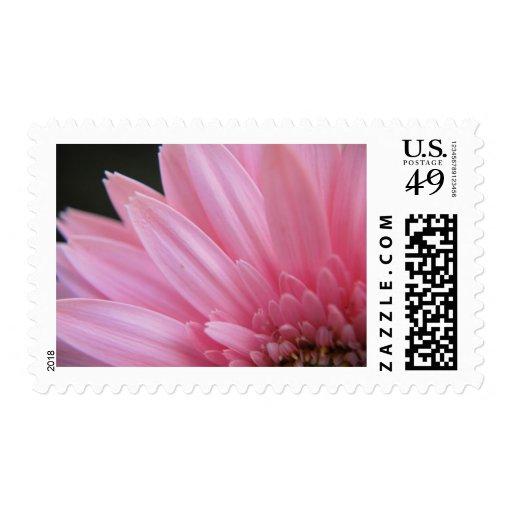 Petal Pink Stamps