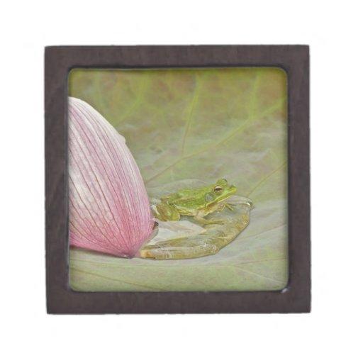 Pétalo de la flor de la rana y de loto, China, Caja De Joyas De Calidad