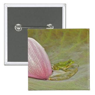 Pétalo de la flor de la rana y de loto, China, Pin