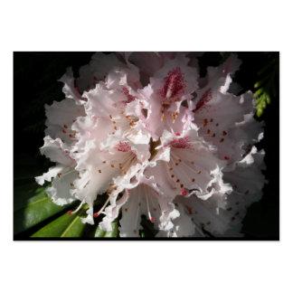 Pétalo rosado en cambio 2 de la flor del rododendr tarjetas de visita