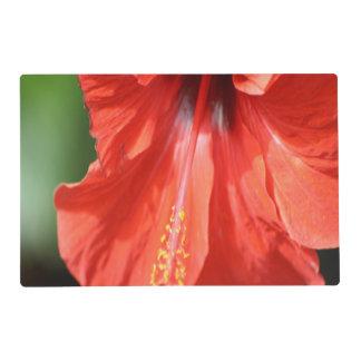 Pétalo y antera rojos con la flor del hibisco del tapete individual