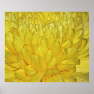 Pétalos amarillos de la dalia póster