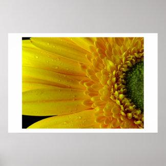 Pétalos amarillos póster