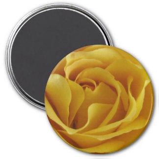 """Pétalos color de rosa amarillos 3"""" imán redondo"""
