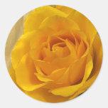 Pétalos color de rosa amarillos etiqueta