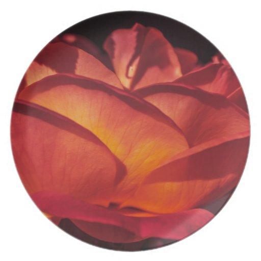 Pétalos color de rosa rojos plato de cena