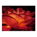 Pétalos color de rosa rojos postal