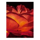 Pétalos color de rosa rojos postales