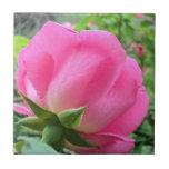 Pétalos color de rosa rosados que brillan intensam azulejo cerámica