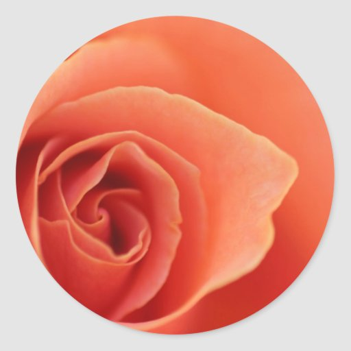 Pétalos color de rosa suaves etiqueta redonda