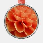 Pétalos coloreados melocotón hermoso de la flor de ornamente de reyes