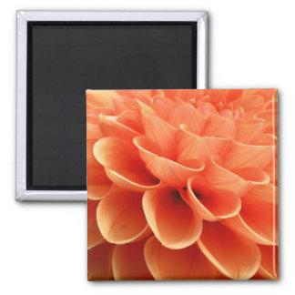 Pétalos coloreados melocotón hermoso de la flor de imanes para frigoríficos