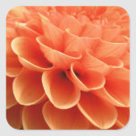 Pétalos coloreados melocotón hermoso de la flor de calcomania cuadrada personalizada