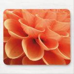 Pétalos coloreados melocotón hermoso de la flor de alfombrilla de ratón