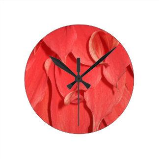 Pétalos coralinos de la flor reloj