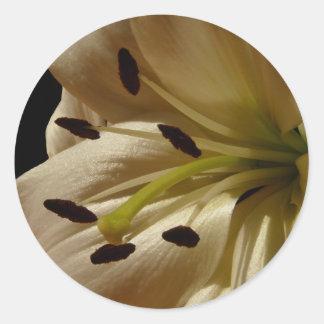 Pétalos de la flor del lirio blanco etiquetas redondas