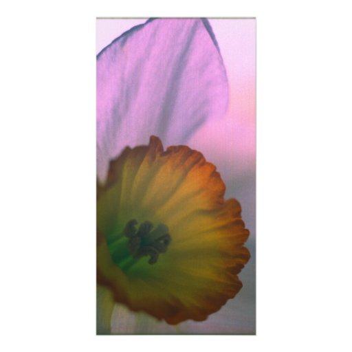 Pétalos del narciso - fotografía amarilla blanca tarjeta con foto personalizada