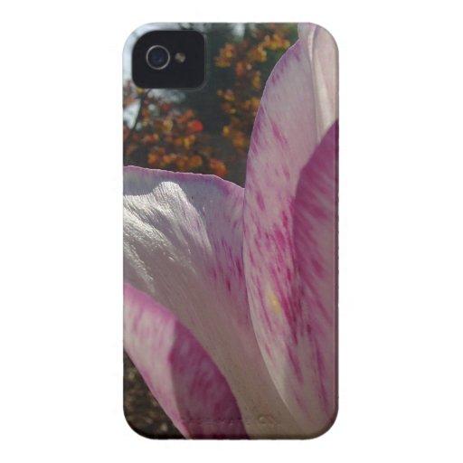 Pétalos del tulipán de color de malva Case-Mate iPhone 4 funda