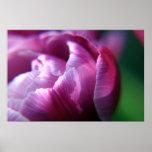 Pétalos del tulipán poster