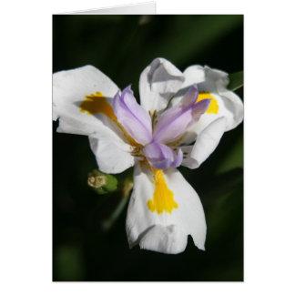 pétalos delicados de la flor tarjeta