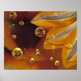 Pétalos en la superficie reflexiva de Mylar con de Póster