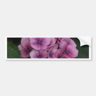 Pétalos púrpuras del Hydrangea Pegatina De Parachoque