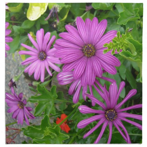 Pétalos púrpuras entre el verdor servilleta
