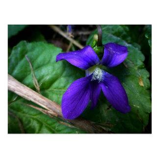 Pétalos púrpuras tarjetas postales
