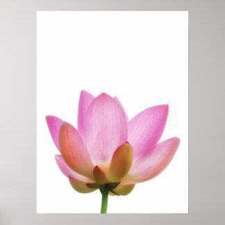 Pétalos rosados de la flor de OM Lotus Póster