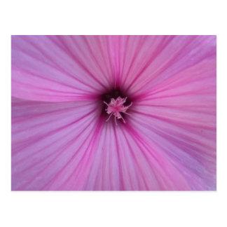 Pétalos rosados del corazón de la flor postales