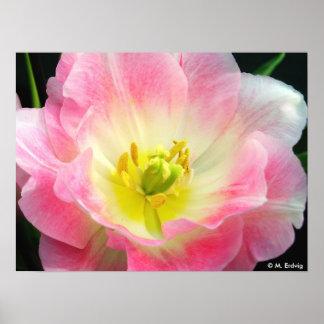 Pétalos rosados poster o impresión