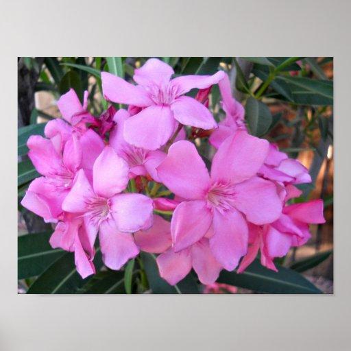 Pétalos rosados preciosos poster