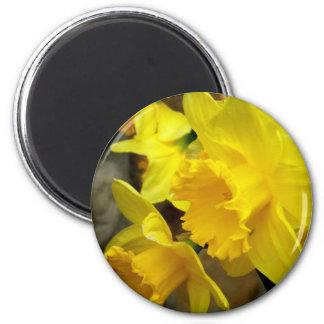 Pétalos soleados imán redondo 5 cm