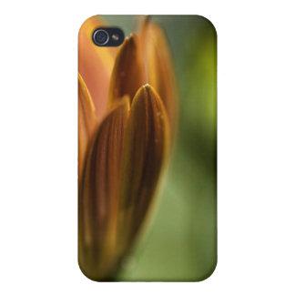 pétalos y brote iPhone 4/4S carcasas