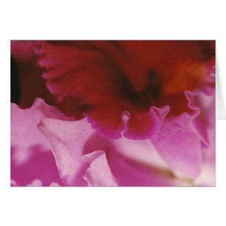 Petalpalooza • Pink Card