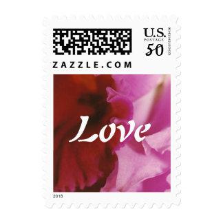 Petalpalooza • Pink Postage