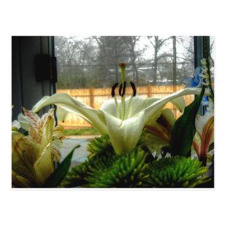Petals & Anthers - Postcard