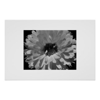 Petals in Black and White Poster