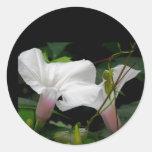 Petals of a Flower Sticker