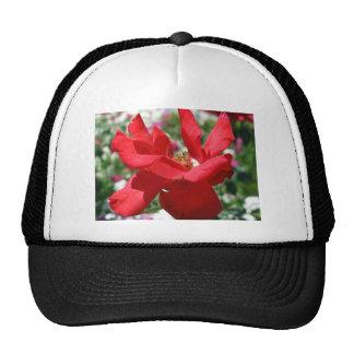 Petals of a red rose trucker hat
