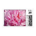 Petals of Pink Postage