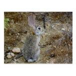 Peter el conejo de rabo blanco tarjeta postal